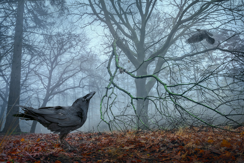 The Raven Tree