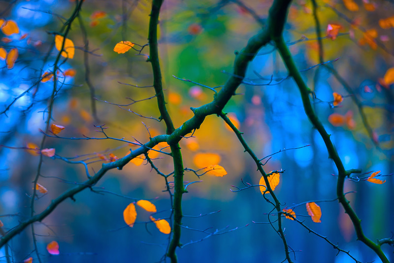 Mosaic in Autumn's Hue