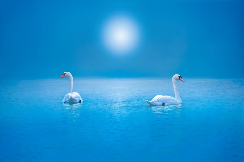 Love at the Swan Lake