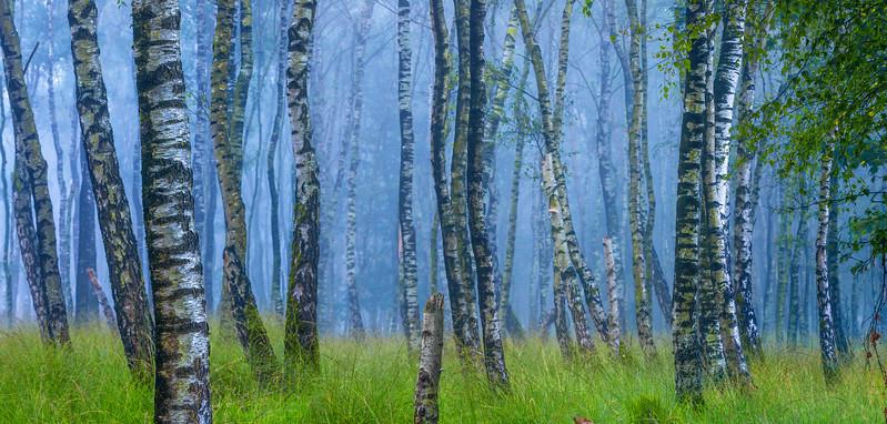 Gentle Trees