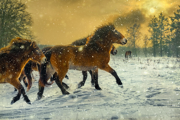 The Snowlights