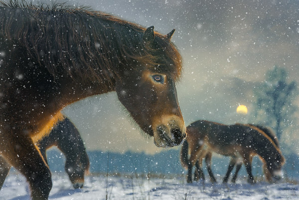 The Dreaming Snowlights