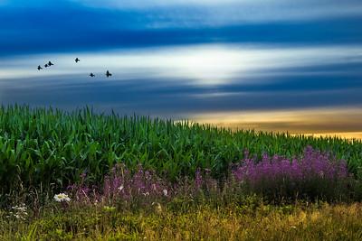 Brabants Agrarisch Landschap