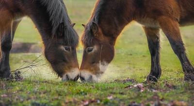 Nosy Love