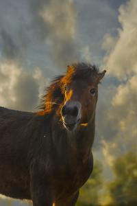 Happy Wild Horse