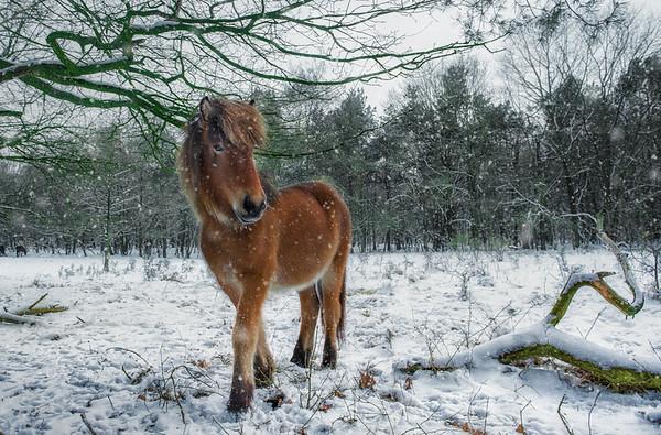 I am Wild Horse
