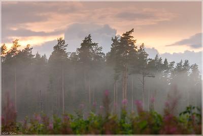Õhtune udu