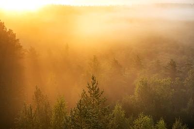 Päike kuldab metsapuid