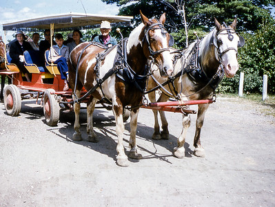 Mackinac_HorseCarriage_MabelInBack_08-54