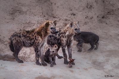 Hyena Juvies
