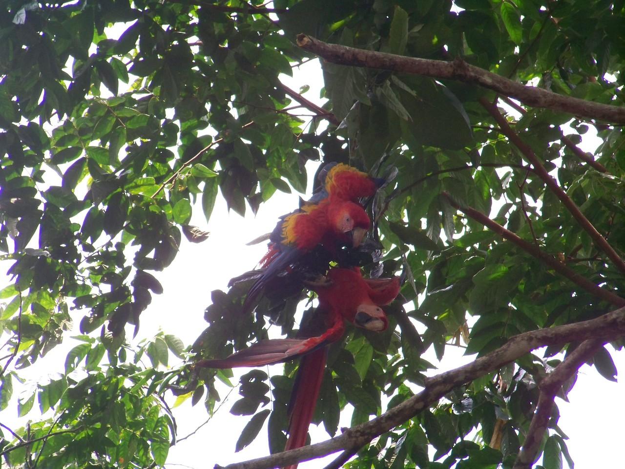 Juveniles in park, Pavones, Costa Rica.
