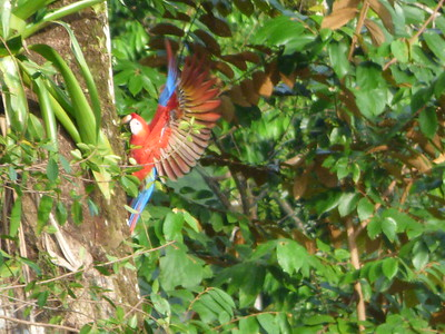 I feel so blessed to have taken this photo in my PJs, as the macaws flew right to the neighborhood for a visit! 2014