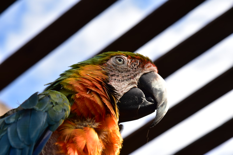 Exotic Macaws, with a Cockatoo thrown in.