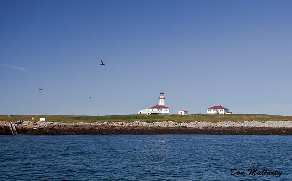 Machias Seal Island - July 2011