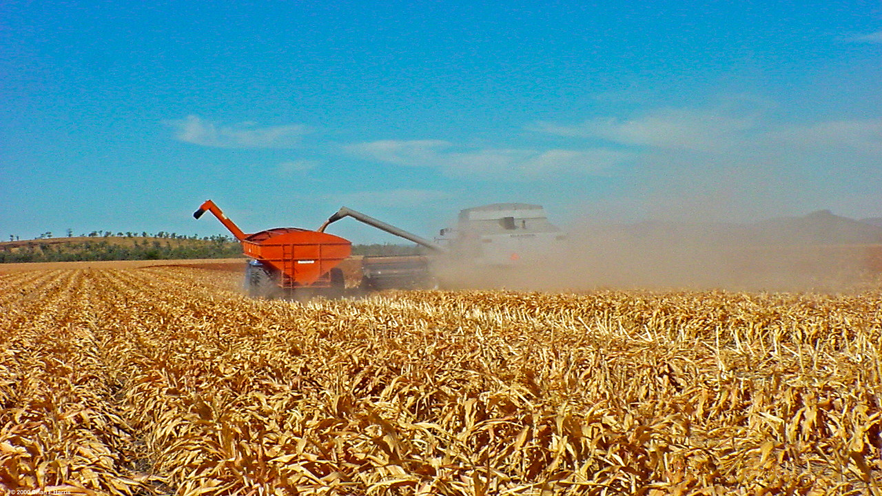 In the Fernlees district near Emerald Qld these three Gleaner harvesters make short work of this very large crop on a broard acre farm. The large semi trailers were kept busy hauling away the grain to firstly be weighed on a road weigh bridge and then, unloading into the below ground pit which feeds it by augers into massive silos. Drivers have UHF two way radios on board