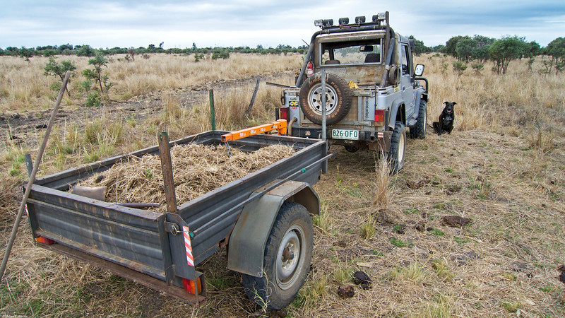 Natural fertiliser. Spanner had a good run up the paddock while we drove. We went up the back of our place to get some hay and grass mulch for our trees we planted. Our rig of choice in this case is my 1994 Rocsta diesel 4x4 2.2 litre. Was fun anyway.