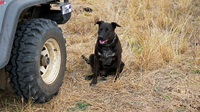 Spanner enjoyed our afternoon outing up the back paddock.