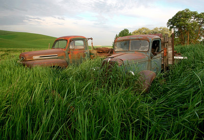 Out to pasture.