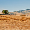 Lots of down wheat making harvest slower at Garver