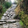 A lot of the Inca Trail looked like a tropical rain forest. My knees are getting sore just looking at this photograph.  This is pretty typical of what the stone trail looks like.  Keep in mind that most of the time these stone trails are wet.