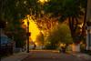 Sunrise on Mackinac Island - Main Street