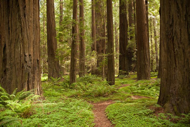 RedwoodsBefore