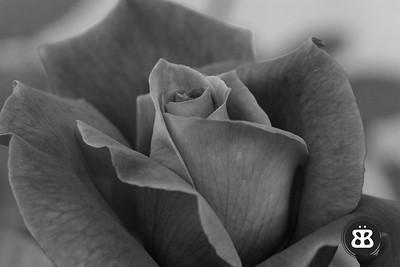 BW Rose 3