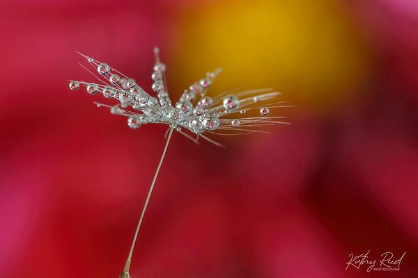 Dandelion Baubles