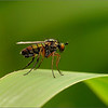 Fly 3 - test met FZ200