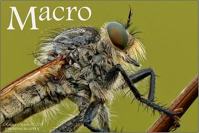Macro & Close-up