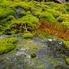 Rock Moss Closeup