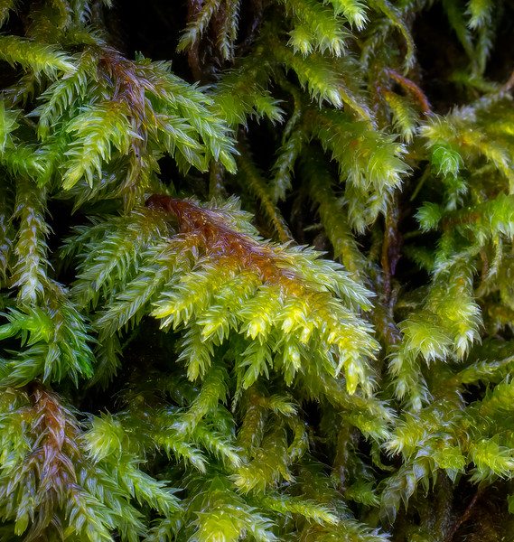 Tree Moss Closeup 3