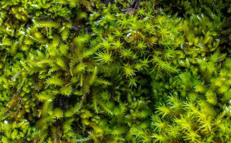 Tree Moss Closeup 2