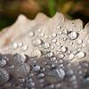 raindrops on a aspen leaf