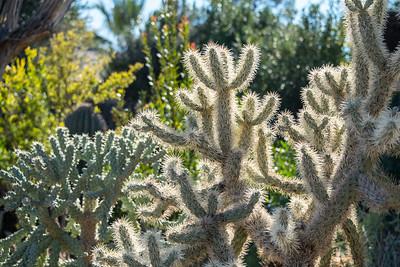 Tucson-Sun-87.jpg