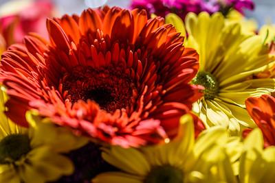Macro2020-Flowers1