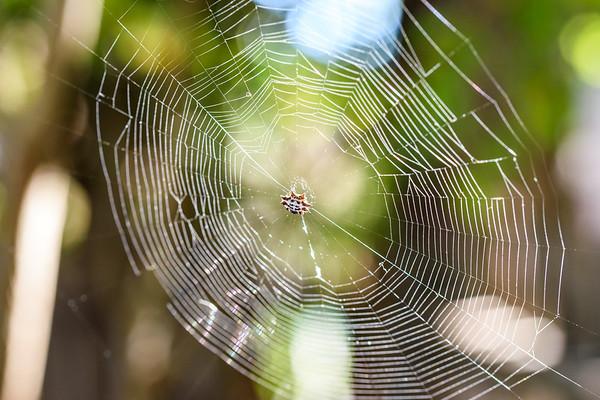 Spider&Web-MacroSunlight