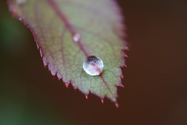 Macro Raindrops2