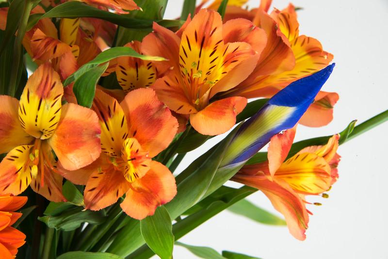 Orange Alstroemeria with Iris Bud