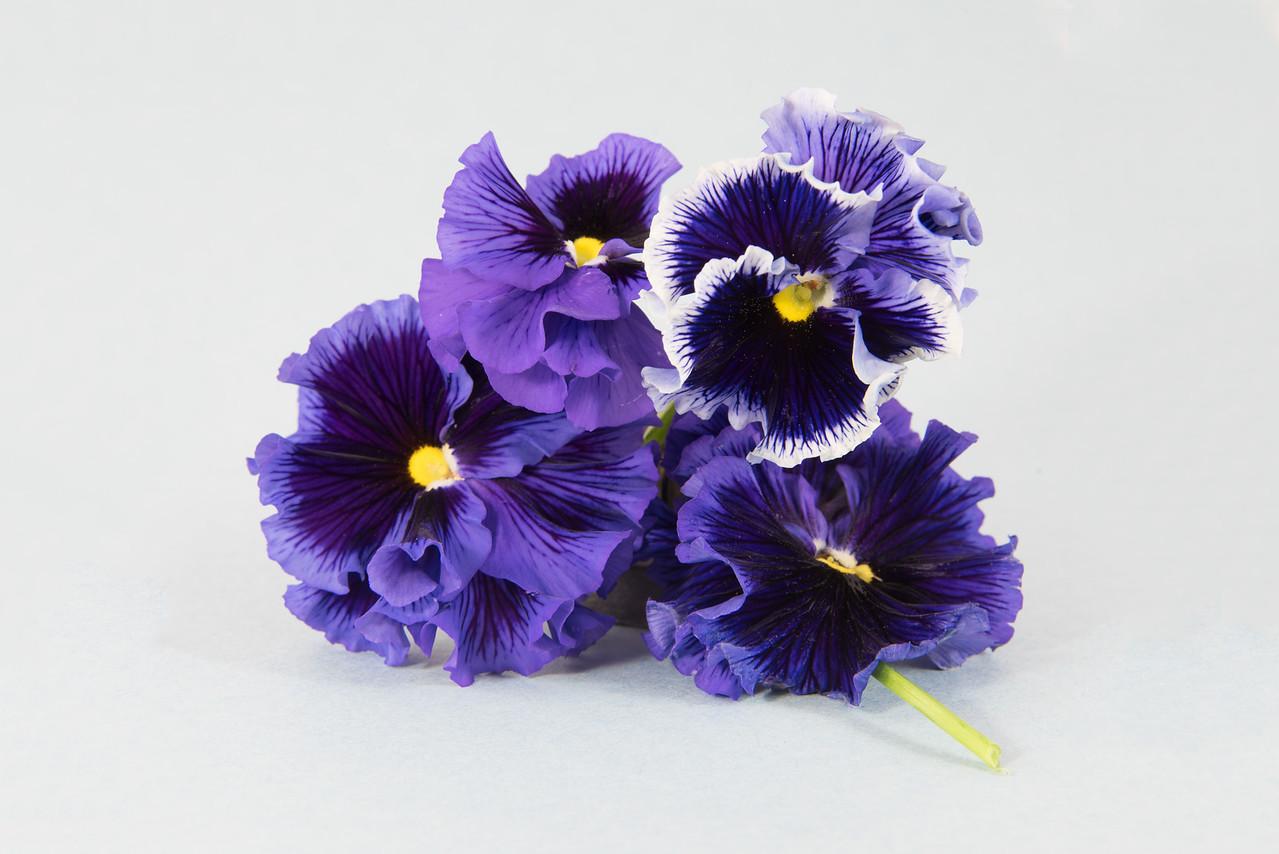 Four Purple Pansies