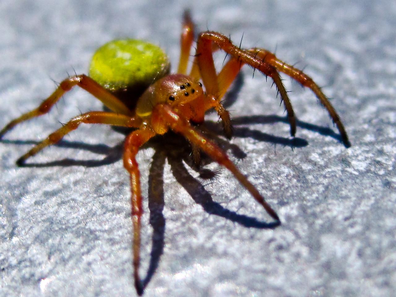 Sunny Spider
