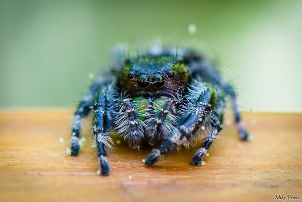 Backyard Resident:  Spider 2