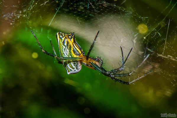 Backyard Resident: Spider 4