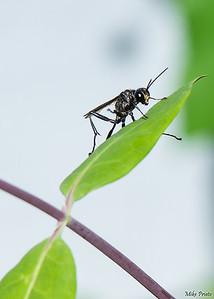 Backyard Resident: Wasp