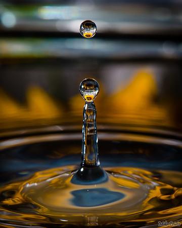 Flower in the Drop