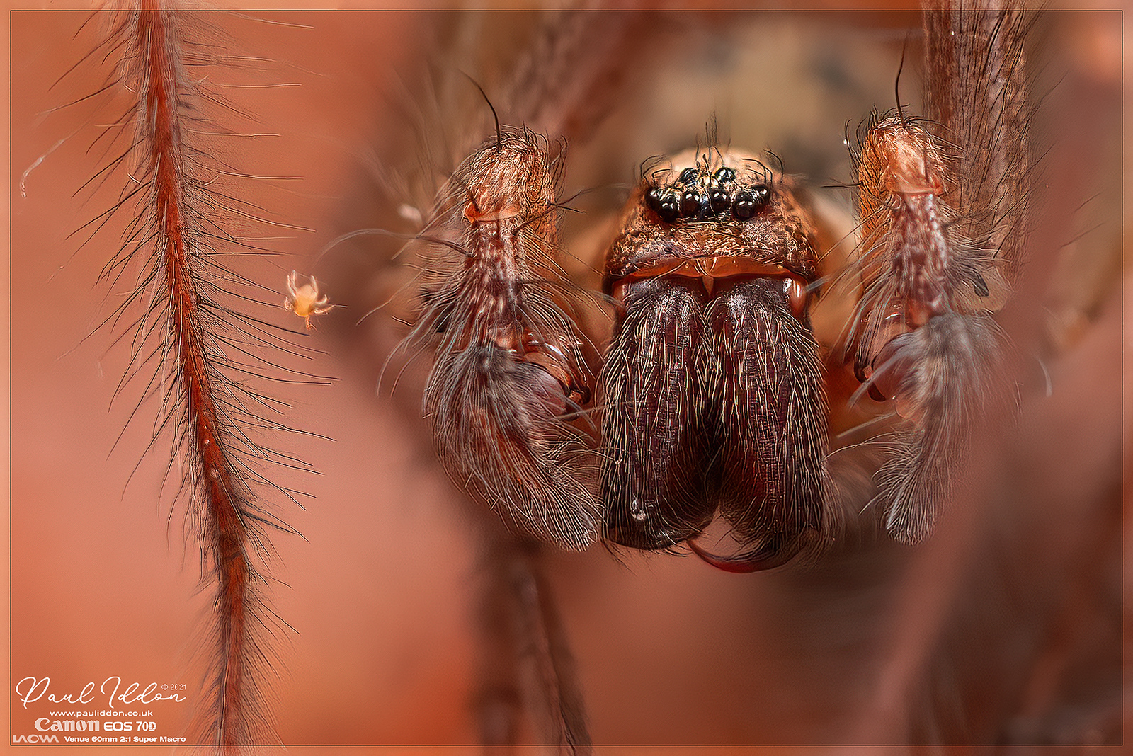IMAGE: https://photos.smugmug.com/Macro-Gallery/i-955bhRk/0/d23d2ddc/X3/spiderlife3_4k_1800-X3.jpg