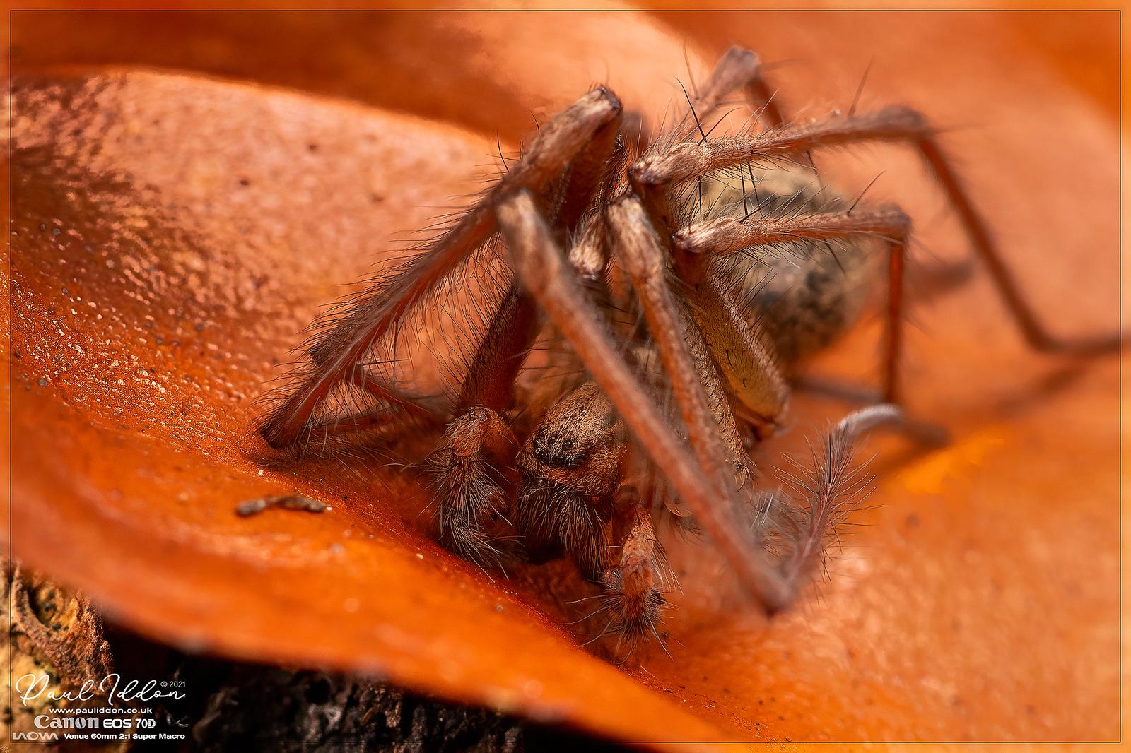 IMAGE: https://photos.smugmug.com/Macro-Gallery/i-rjjrPHq/0/c2d70c5e/X3/spiderlife1_4k_1800-X3.jpg