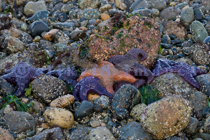 A low tide near Post Post revealed some brightly colored starfish.