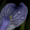Mystery Swirl