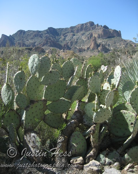Picket Post Mountain and Prickly Pear Cactus
